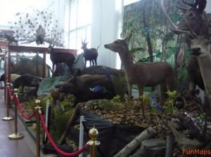 muzeul-zoologic-cluj3